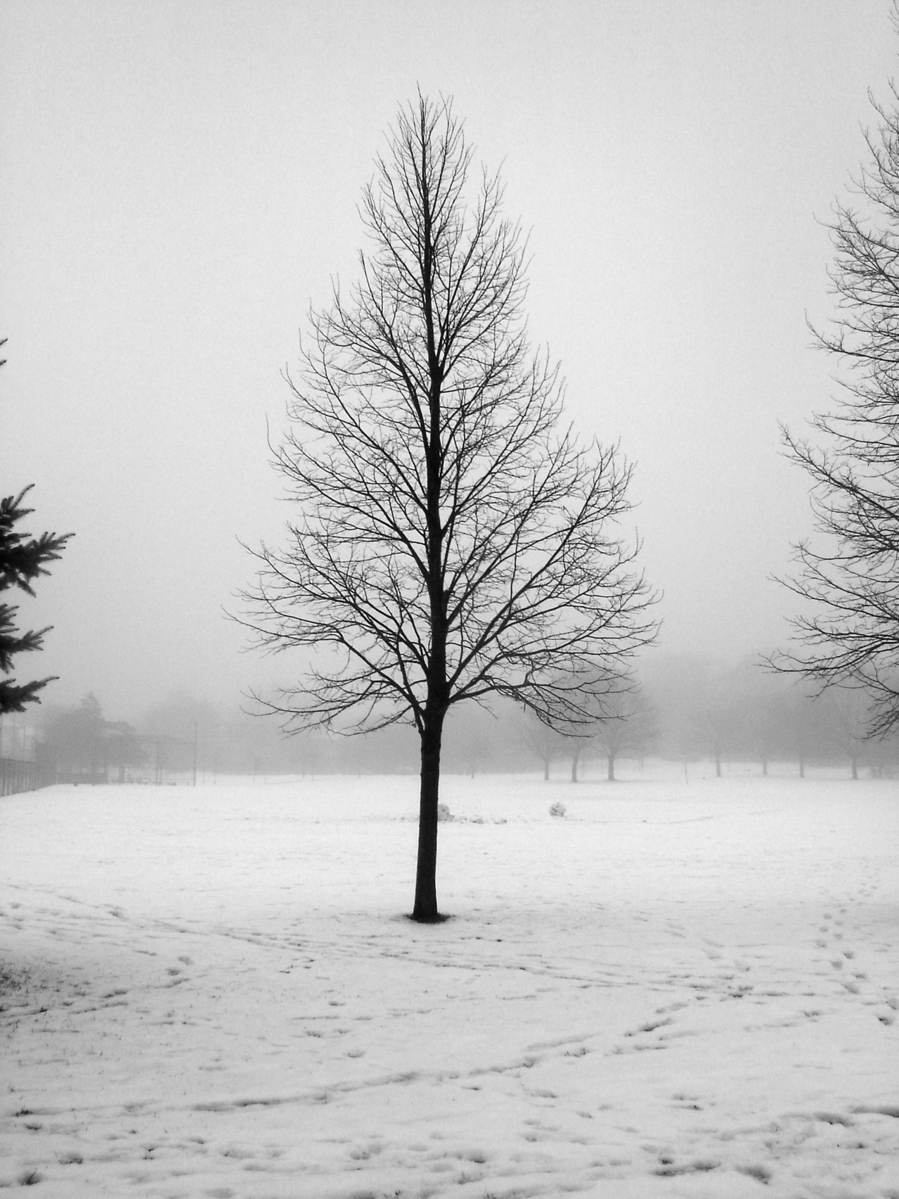 toronto-in-winter-1144905-1279x1705